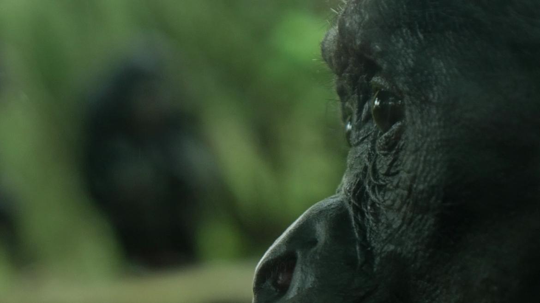 Bonobo SRF 2014